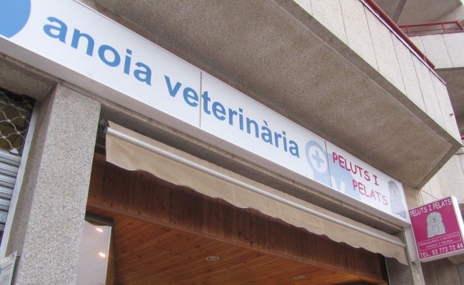 hospital-veterinari-masquefa